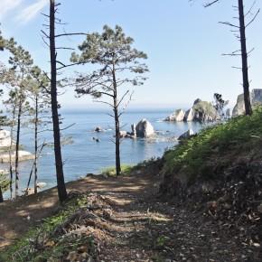 Wald Küste